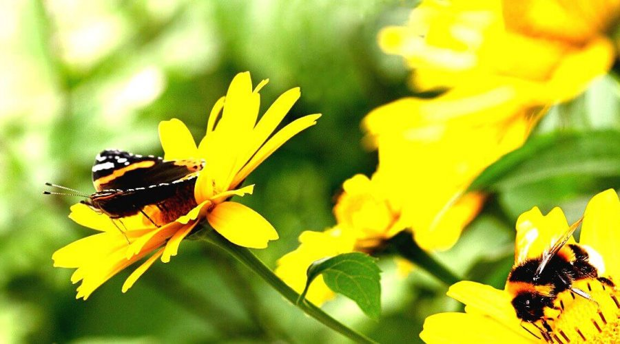 Petition: Bees, Butterflies, And Other Insects Are Dying