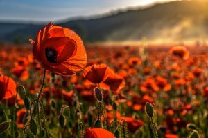 Lest We Forget   Happy Memorial Day