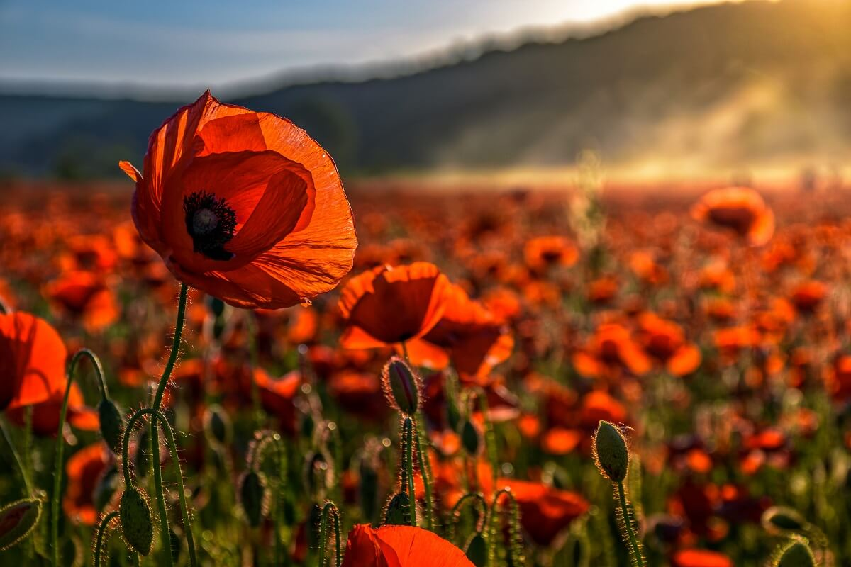 Lest We Forget | Happy Memorial Day