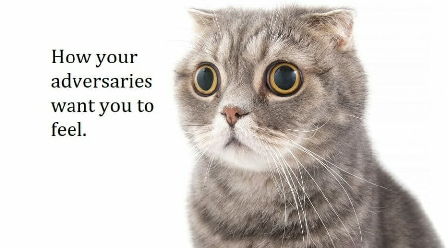 A Cat's Response To Fear