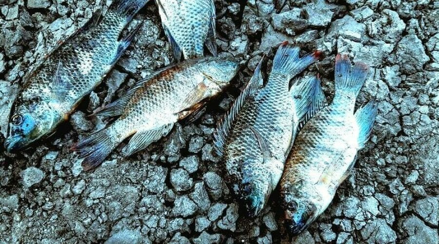 Help Protect The Fishing Industry From Destructive Legislation